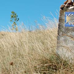 Camino – trudności są drogą