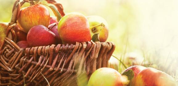 Czas rodzenia owoców